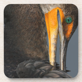 Cormorant up Close Beverage Coaster