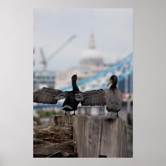 Cormorants birds in London England Poster