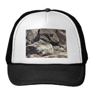 Cormorants Trucker Hats