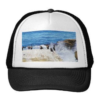Cormorants Ocean Birds 3 Hats