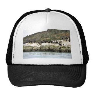 Cormorants on Sea Rock Trucker Hat