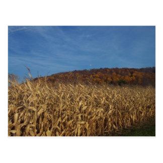 Corn and Blue Sky moon Postcard
