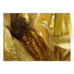 Corn close up Greetingcard Greeting Card