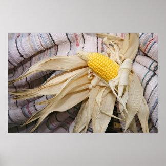 Corn cob poster