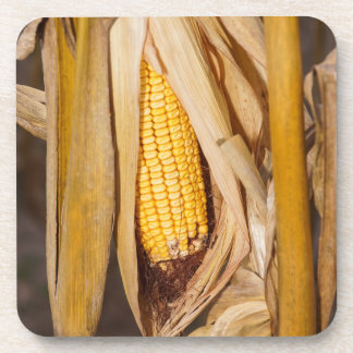 Corn Cobb On Stalk Coaster