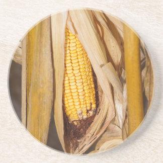 Corn Cobb On Stalk Drink Coaster