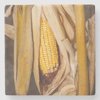 Corn Cobb On Stalk Stone Coaster