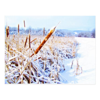 Corn Dog in winter Postcard