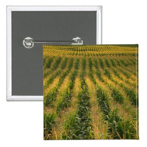Corn field Button
