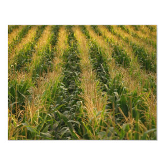Corn field card