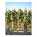 Corn Field Custom Letterhead