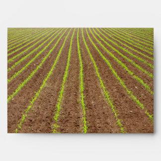 Corn field envelopes