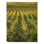 Corn field flyers