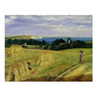 Corn Field in the Isle of Wight Postcard