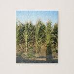 Corn Field Jigsaw Puzzle