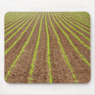 Corn field mouse pad