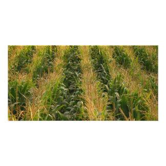 Corn field photo card