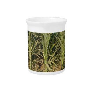 Corn Field Drink Pitchers