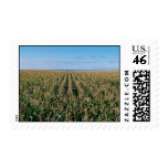 Corn field postage stamps