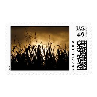 Corn field Silhouettes Postage