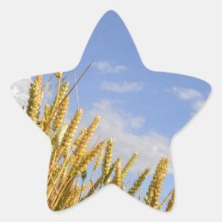 Corn Field Star Sticker