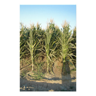 Corn Field Stationery Paper