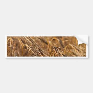 Corn field with grain bumper sticker