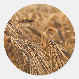 Corn field with grain classic round sticker