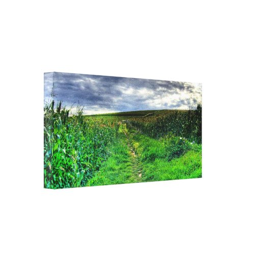 Corn Fields Gallery Wrapped Canvas