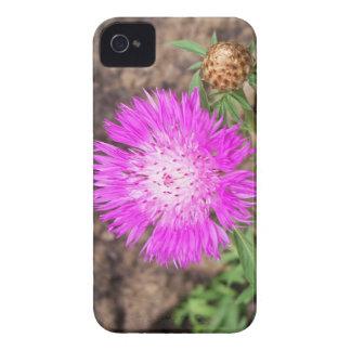 Corn Flower iPhone 4 Case-Mate Case