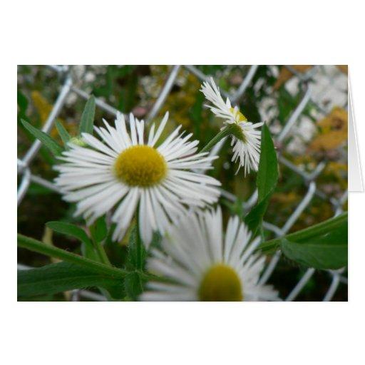 Corn Flowers fenceline Card
