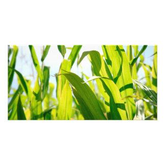 Corn leaves card