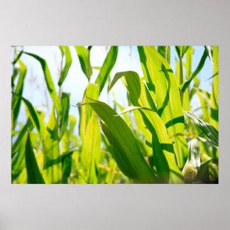 Corn leaves poster