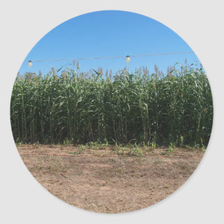 corn maze classic round sticker