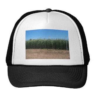 corn maze trucker hat