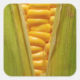 Corn on the Cob Square Sticker