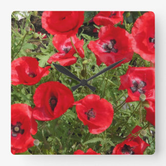 corn poppy blooms in red square wallclocks