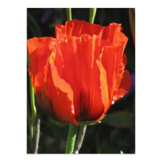 Corn Poppy Card