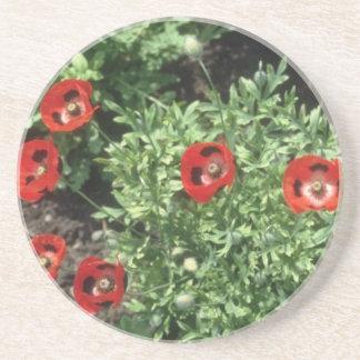 Corn Poppy (Papaver Rhoeas) flowers Drink Coasters