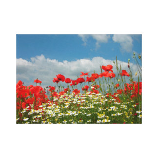 Corn poppy with chamomiles flowering in the field, canvas print