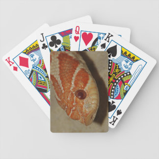 Corn snake bicycle playing cards
