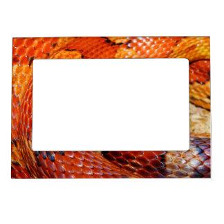 Corn Snake Magnetic Frame