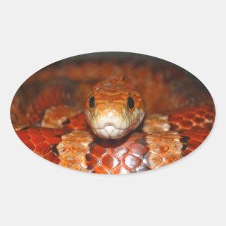 Corn Snake Oval Sticker