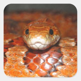 Corn Snake Square Sticker