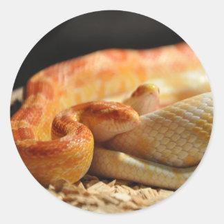 classic corn snake - photo #41
