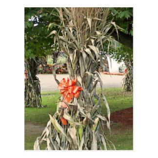 corn stalk post card