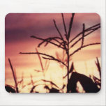 Corn Tassels at Sunset Mouse Pads