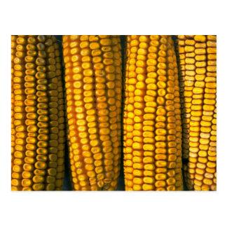 Corn texture postcard