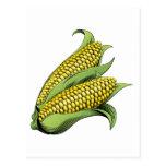 Corn vintage woodcut illustration postcards