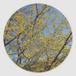 Cornelian Cherry Dogwood and Blue Sky Classic Round Sticker